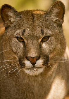Puma | Flickr - Berbagi Foto!
