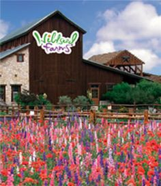 Inspiration for Elissa Mason's Paradise Garden Nursery in Marrying the Cowboy Wildseed Farms-Fredericksburg, Texas. Display gardens and flower fields. Texas Roadtrip, Texas Travel, Places To See, Places Ive Been, Only In Texas, Fredericksburg Texas, Loving Texas, Texas Pride, Texas Hill Country