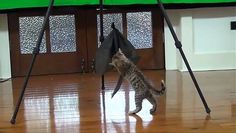 Funny Kittens Playing with Black Wrapping Paper http://ift.tt/1X7ja5i