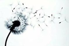 Gallery For > Black And White Dandelion Painting Mini Tattoos, Flower Tattoos, Body Art Tattoos, New Tattoos, Cool Tattoos, Tatoos, Dandelion Tattoo Design, Dandelion Tattoos, Dandelion Painting