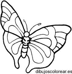 tipos de mariposas dibujos - Buscar con Google