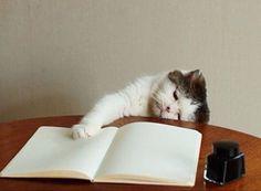 貓如人一樣,星期三總是每星期最懶洋洋的一日,不想工作!   #貓奴士多 #貓奴 #貓星人 #貓 #catstore          #貓  原文請看