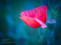 Memories of summer  by marie-rich #nature #photooftheday #amazing #picoftheday