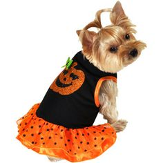 SimplyDog Pumpkin Dog Dress, Multiple Sizes AvailableMy delilah beautiful service dog with her new out fit for hallaween.STill looking for Angel custom first.cause she's my little angel Helper.AND makes everyone feel so good and calm and happy when shes around them.She says Free Kisses and links,and hugs paws five way too cute.Angel Grams.