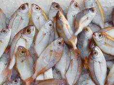 #catch #fish #fish market #fishing #food #fresh #head #healthy #ice #marine #market #ocean #sale #seafood #stock