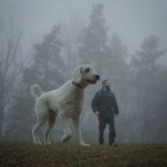 Сосу у своего пса фото 104-707