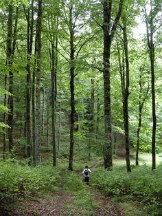 Irati, Pirineo navarro. Senderismo guiado verano. Beautiful Forest, Basque Country, Mtb, Plants, Painting, Ideas, Wayfarer, Pyrenees, Forests