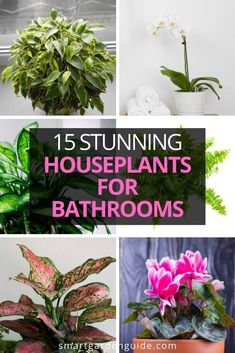 Stunning houseplants that are perfect for your bathroom. These plants love high humidity and don't mind low light. Watch them thrive as they brighten up your bathroom. Pictures, care tips and descriptions of my favorite houseplants for bathrooms. Easy Care Indoor Plants, Indoor Flowering Plants, Blooming Plants, Outdoor Plants, Air Plants, Peperomia Plant, Pothos Plant, Phalaenopsis Orchid, Orchids