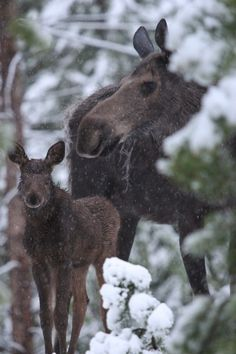 Momma and baby in Colorado