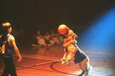 what if Buddy took his talents beyond amateur level? Here are the seven things we'd expect to see if Air Bud actually played in the NBA. Air Bud, Walt Disney World Vacations, Disney Tips, Travel With Kids, Nba, Movies, Films, Cinema, Movie