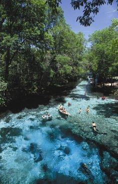 Ginnie Springs | one of the clearest springs in Florida. The 72-degree water is…
