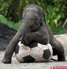 Who wants play with the elephant