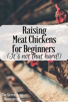 Raising meat chickens for beginners is just that how to raise meat chickens as a beginner. This is all you need to know to start raising meat chickens.
