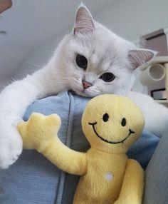 #cute #cats