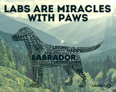Labs~I believe this!