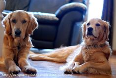 Very Merry Vintage Syle: beautiful golden pair