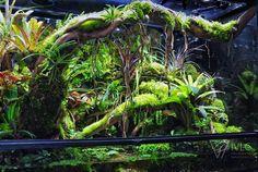 Andrey's wall photos Snake Terrarium, Aquarium Terrarium, Terrarium Plants, Aquarium Garden, Aquarium Landscape, Aquarium Fish, Indoor Water Garden, Les Reptiles, Vegetable Gardening