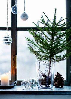 Sensaciones........Un Aroma A Navidad.......Pinos,Abetos......Resina Fresca