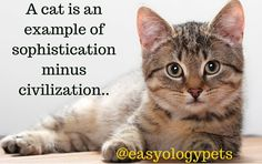 A cat is an example of sophistication minus civilization! @easyologypets