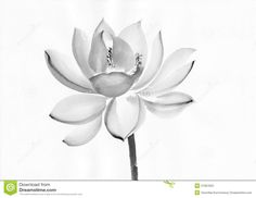 Lotus flower is one of the most symbolic tattoos found today. Description from pinterest.com. I searched for this on bing.com/images