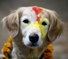 Each year, during the Kukur Tihar festival, hindus in Nepal celebrate dogs, man's best friend
