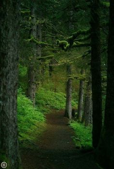 Forest Path, Dark Forest, Beautiful World, Beautiful Places, Foto Nature, Château Fort, Walk In The Woods, Pics Art, Nature Scenes