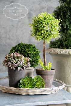 love the plants and containers - is that possibly a little round boxwood?  cool from NC Studio Photography & Design: Tai Pan Trading