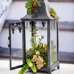 This Succulent Lantern is the perfect decor for your home. It can also be used as a stylish centerpiece! Make this lantern in a few simple steps. Fairy Lanterns, Garden Lanterns, Lanterns Decor, Candle Lanterns, Fairy Lights, Lantern Centerpieces, Succulent Centerpieces, Succulent Landscaping, Succulents Garden