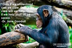 """""""Only if we understand can we care. Only if we care will we help. Only if we help shall all be saved."""" - Jane Goodall"""
