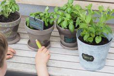 Gärtnern mit kleinen Kindern - Tipps und Tricks ⋆ Miss Broccoli Broccoli, Planter Pots, Planting For Kids, Sprouting Seeds, Harvest, Tips And Tricks