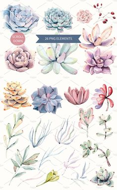 Oh my Succulents watercolor set by Lemaris on @creativemarket Watercolor Succulents, Watercolor Flowers, Watercolor Art, Succulents Drawing, Watercolor Illustration, Botanical Illustration, Graphic Illustration, How To Draw Hands, Succulent Tattoo