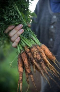 The carrots that tinted your hands orange. Herb Garden In Kitchen, Growing Tomatoes, Grow Your Own, Garden Gates, The Ranch, Simple Pleasures, Vegetable Garden, Asparagus, Carrots