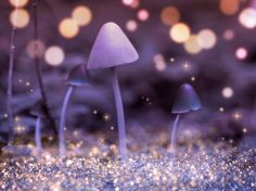 Nature Photography Toadstools Woods Magical Fairy by Fizzstudio, $50.00