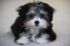 My grand puppy