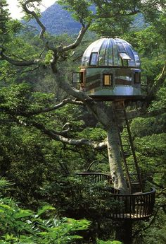 beach rock treehouse, Japan