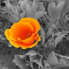 A Touch of Brightness! - by Sheryl