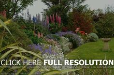 pics photos garden borders ideas design laceleaf japanese red maple used front yard island planting