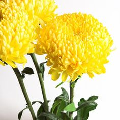 Large chrysanthemums are ideal for puppy bouquets.