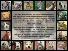 """All dogs pictured are in Fulton animal control, proving you can find purebred pitbulls and adorable puppies in shelters. An average of 150 pitbulls are killed each week in Metro Atlanta shelters. """"PLEASE ADOPT""""!!!"""