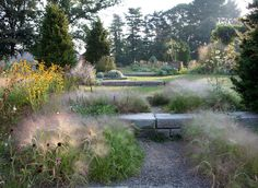 A view from the top of the  Rock Ledge looking towards the Gravel Garden, with clouds of <em>Panicum capillare</em>, or witchgrass, lining the steps. <h6>Photo by Lisa Ropers</h6>
