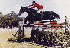 Idle Dice was born in Oklahoma in 1962. He was owned by Debbie Rhodes and was trained by J. Kenneth Huffman. Idle Dice was 3 times an American gold medalist and was credited with 31 Grand Prix victories. In 1974, he competed at the World Championship in Europe. In 1977 Dice was named the Grand Prix Horse of the Year. Dice was the only horse who won the President's Cup twice at the Washington International Horse Show.