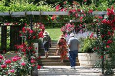 rose garden at brookside.jpg