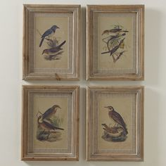 Birch Lane Illustrated Birds Framed Prints