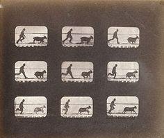 The Attitudes of Animals in Motion, Eadweard J. Muybridge, 1878-81