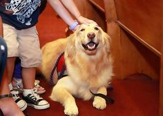 Courthouse dog Emma in Roswell, New Mexico, with a child in court.