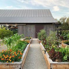 Precious Tips for Outdoor Gardens - Modern Veg Garden, Vegetable Garden Design, Edible Garden, Garden Beds, Back Gardens, Outdoor Gardens, Potager Palettes, Beddinge, Garden Spaces