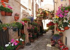 Spello-Umbria-italy-famous-places-streets-flowers-beatiful-fantastic-most-top-trip-visit-honeymoon.jpg (812×579)