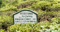 Heritance Tea Factory Sri Lanka