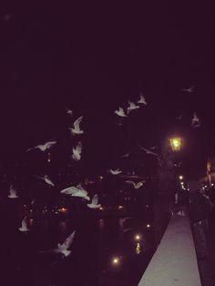 Palomas volando desde el Puente de Carlos Praga