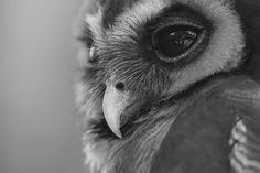 creeeeeeeepy! Owl trainers said most breeds aren't very smart either... the cute ones are sure cute through.